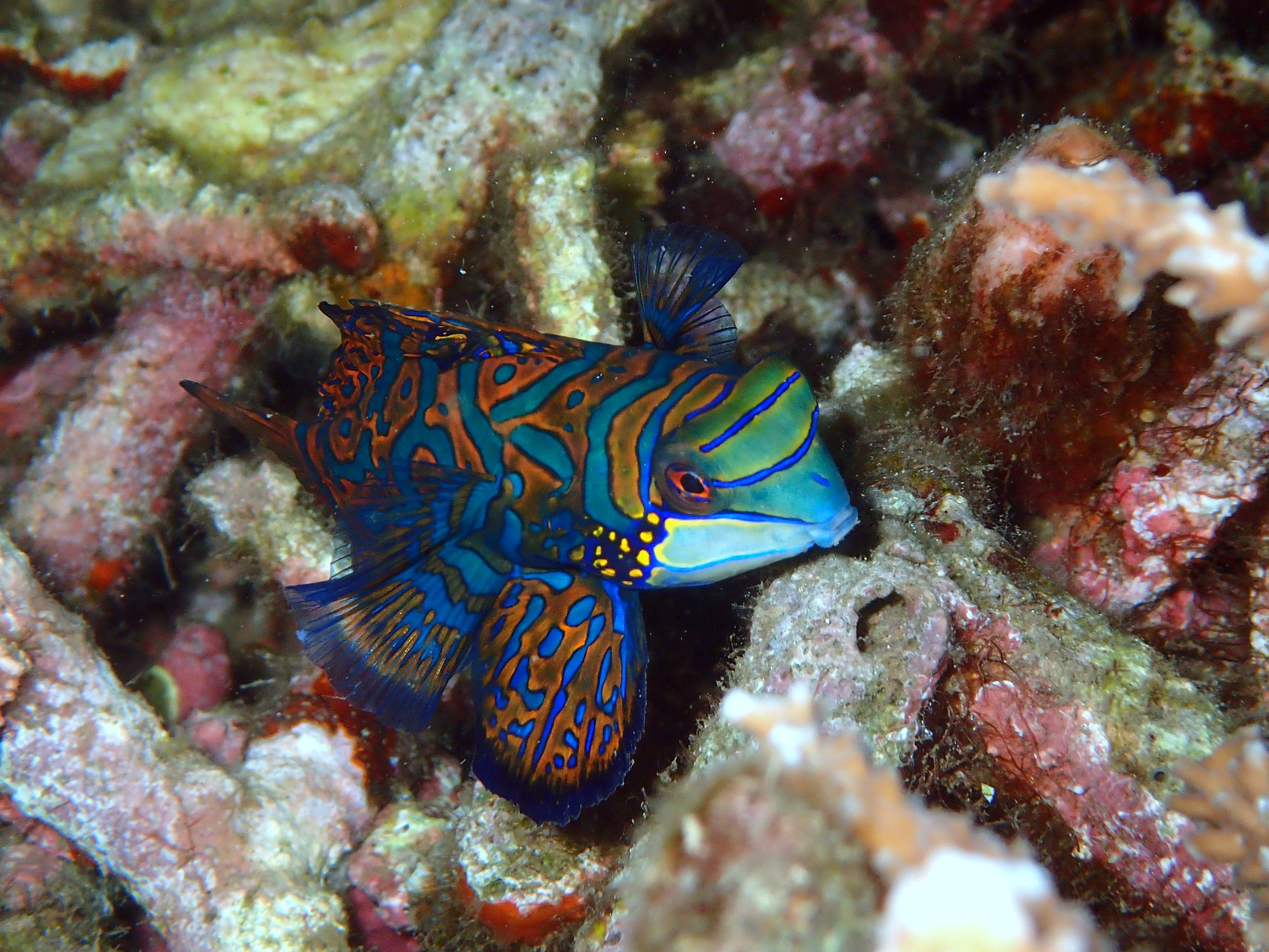 Phoe Travels to Sulawesi in Indonesia to snorkel with the Mandarin Fish